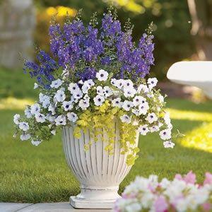 Container Flower Gardening #Digin
