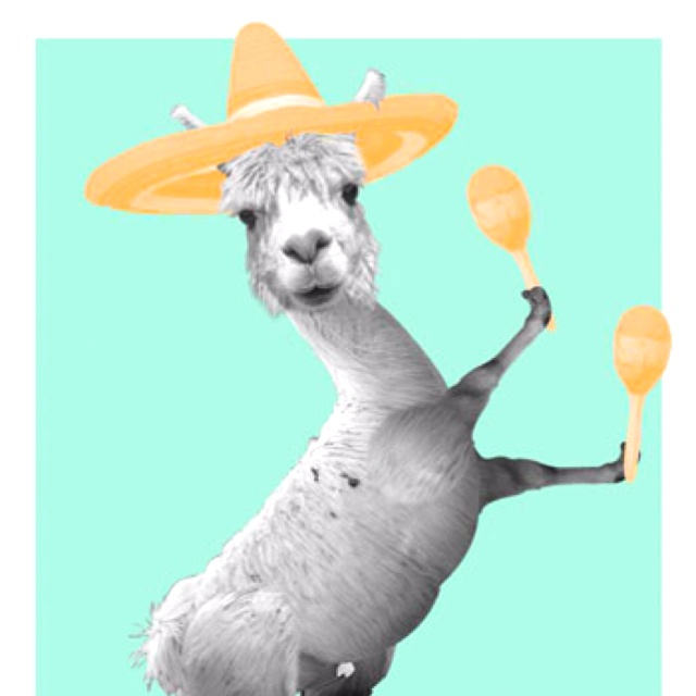 alpacas with maracas - photo #37