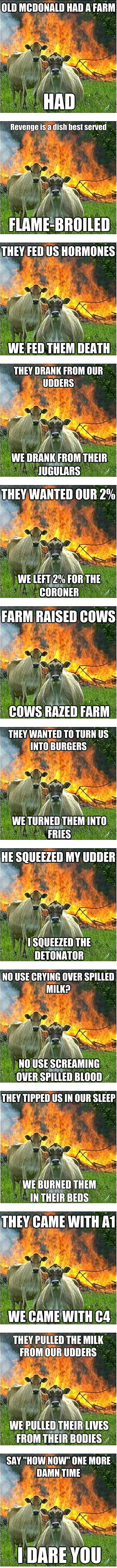 Best of the Angry Cow meme.