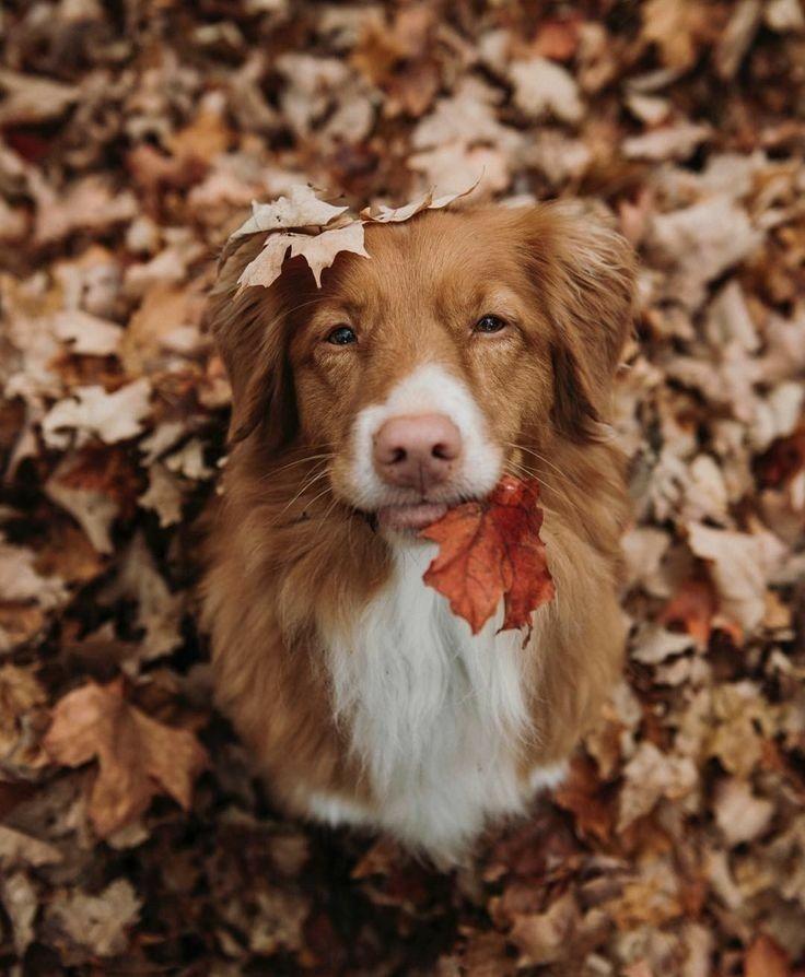 Dog Photography Dog Photo Dog Picture Dog Dogphotography Dogpicture Doglover Petdog Dogpets Photodog Petdog Doglove Do Dog Lovers Dogs Cute Animals