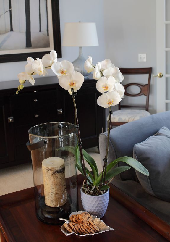 DIY Orchid Inspiration