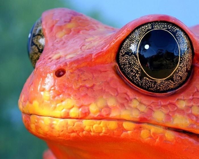Animales Naturales - Estos ojos parecerían estar hechos de oro y ónix.