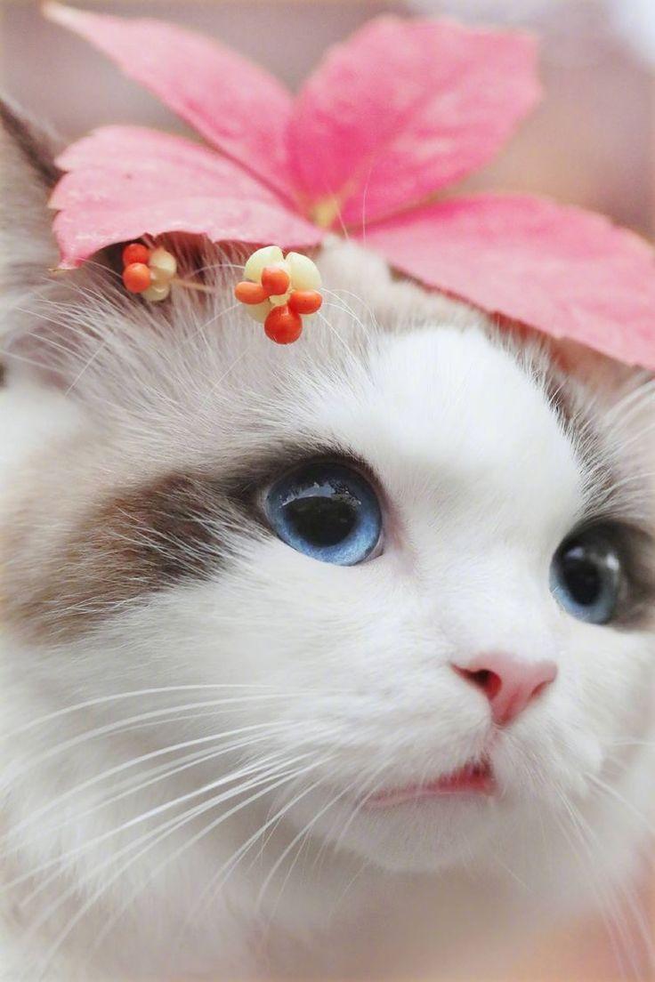 Gemütlich Süße Malvorlagen Von Kätzchen Fotos - Entry Level Resume ...