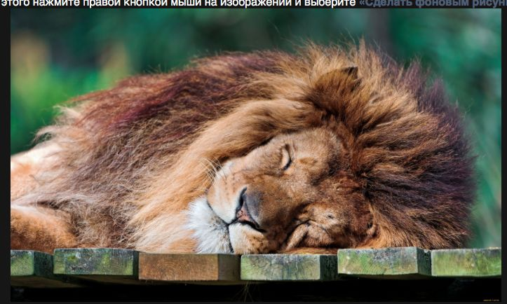 2) Ленивые животные по природе. Лев – царь зверей, более 20 часов эта большая кошка спит, 2 часа передвигается, и 50 мин. тратит на еду, лев очень редко охотится, он охраняет свой прайд. В основном львицы выходят на охоту группами с наступлением темноты. В день взрослому льву необходимо 7 кг. мяса, но иногда он может съесть и 30 кг. за день делая перерыв на сон