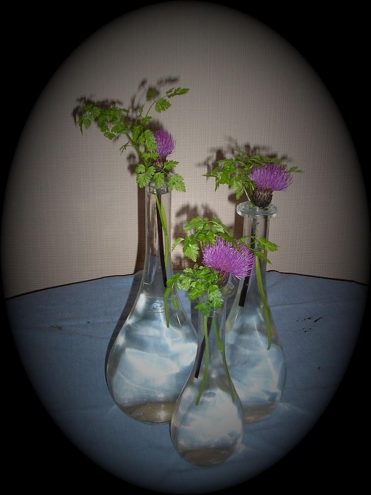 ville blomster...tistler og sitronmelisse