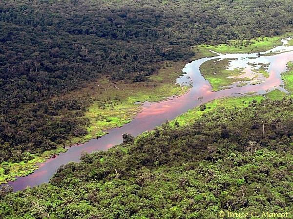 Salonga National Park, Democratic Republic of the Congo - Africa's largest tropical rain forest reserve is situated at the heart of the Congo River basin and only accessible by water. It is the habitat of endangered species such as the bonobo, the Congo Peafowl, the forest elephant, and the slender-snouted crocodile. The site was deemed to be in danger in 1999, due to increased poaching activities and encroachments.
