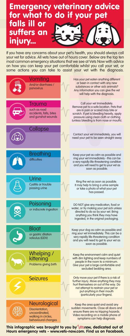 Great Pet Emergency Information
