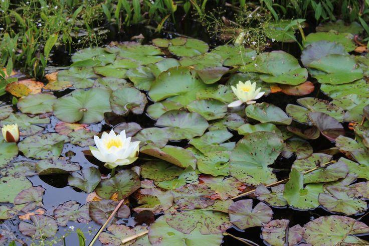 Castlewellan Forest Park // A Breath of Fresh Air –  Suspicious Pebbles