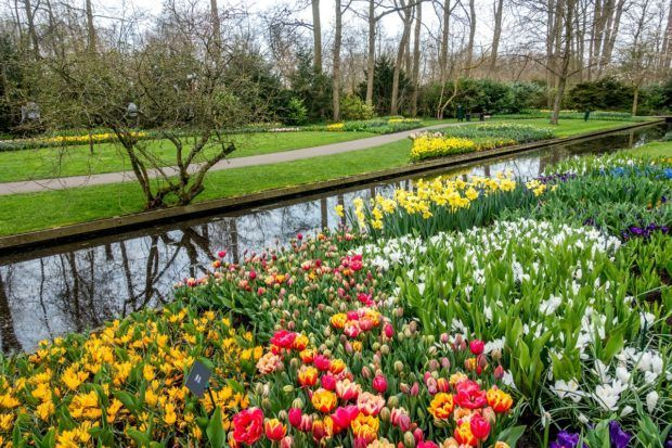 cc26c752129f2f3239e0af33ad6c2caa - How To Get To Keukenhof Gardens