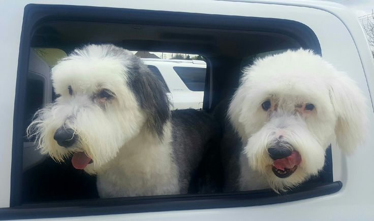 Shelby and Winston ready for a road trip