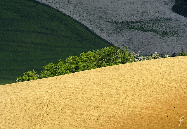 le marche love: Photos, Marching Italy, L Italia, Le Marching, Fields Colour