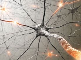 Memories May Not Live in Neurons' Synapses. The finding could mean recollections are more enduring than expected and disrupt plans for PTSD treatments