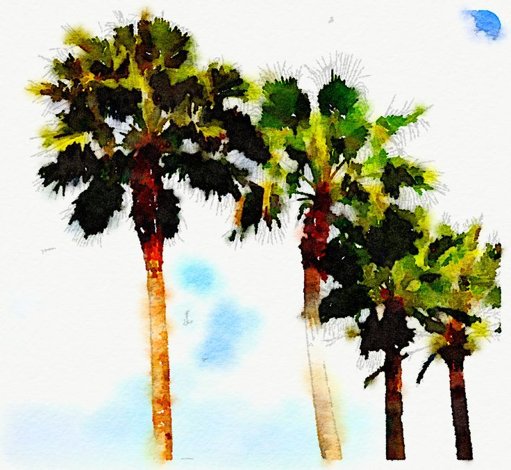 Palms Overhead