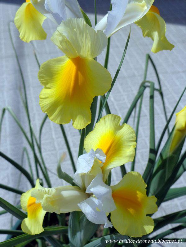 Brilhos da Moda: Flores, uma maravilha da natureza #51