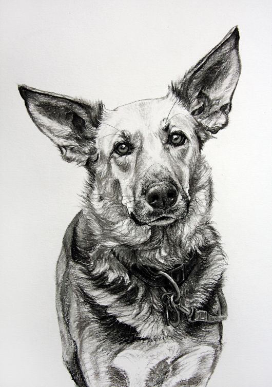 Dog art by Amy Little, Ears 1, 2013, Charcoal on paper
