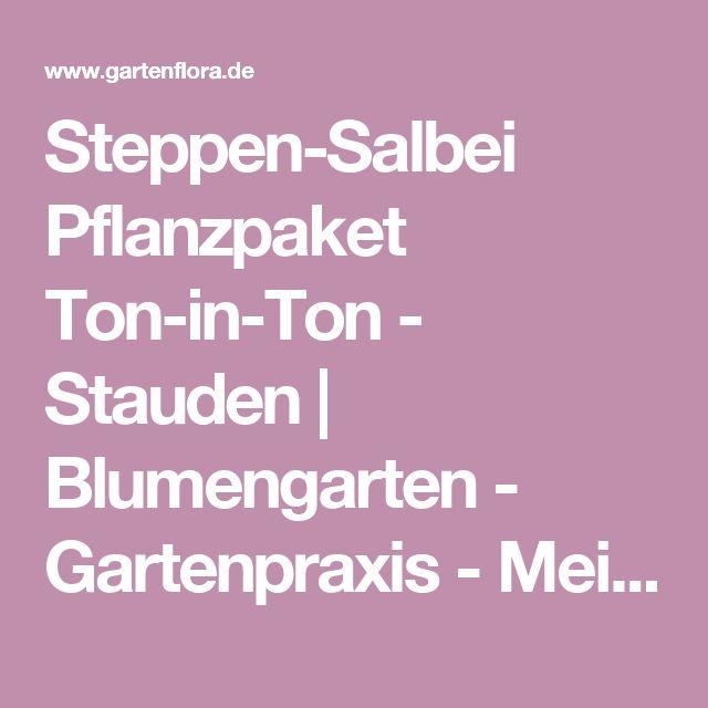 Steppen-Salbei Pflanzpaket Ton-in-Ton - Stauden   Blumengarten - Gartenpraxis - Mein Garten - gartenflora.de