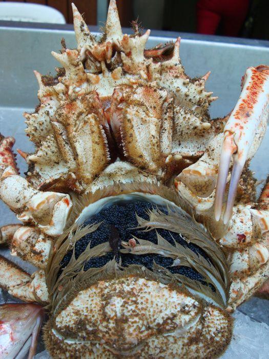 Marché de Bastia : araignée de mer (femelle)