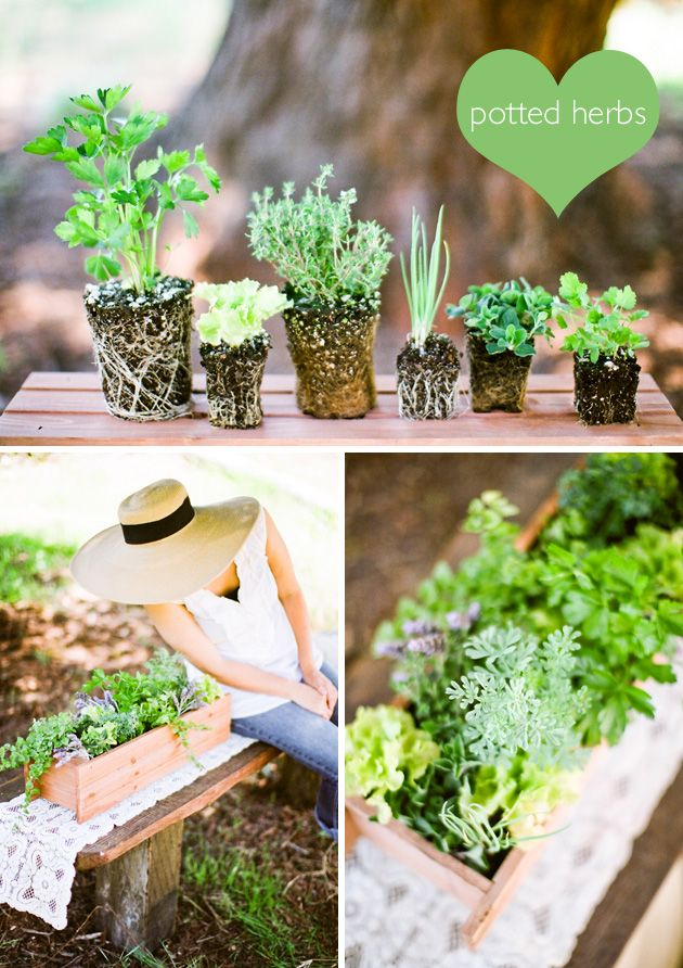 107 best Herb and plant gift ideas images on Pinterest | Gardening ...