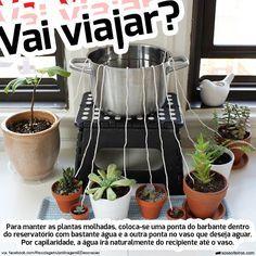 regar plantas capilaridade viajar viagem                                                                                                                                                      Mais