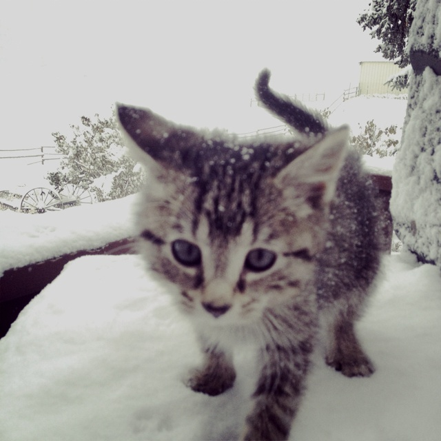 First time in the snow!! | Broce Ranch | Pinterest | First time, Snow ...