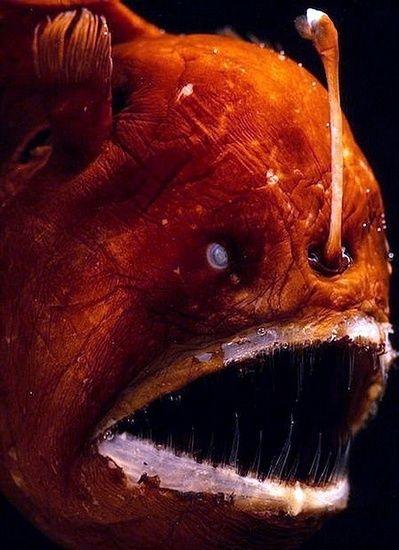 Deep Sea Creatures. It has teeth like spears,...