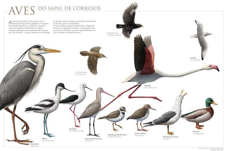 Aves do Sapal de Corroios