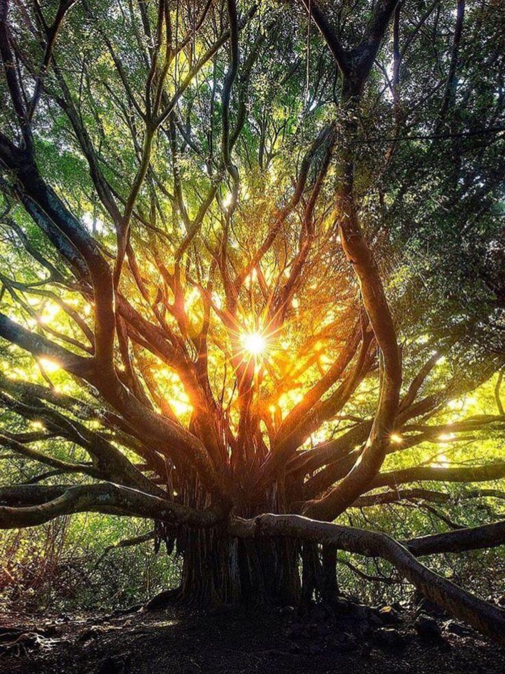 #TREE##SUN# #SUNNY##AMAZİNG#