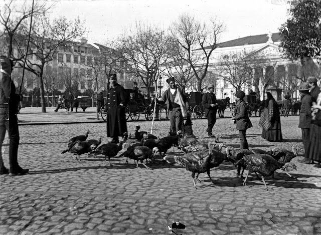 Lisboa de Antigamente - venda ambulante de perús por alturas do Natal. Praça D. Pedro V (Rossio actual) - Lisboa (c.1891). - f. de Augusto Bobone, in AML