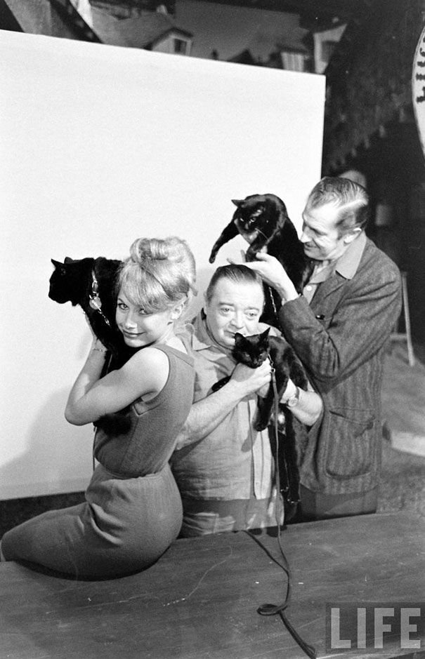 Black Cat Auditions in Hollywood (1961)Cat Art, Ralph Cranes, Hollywood 1961, Black Cat Hollywood3, Cat Audition, Cat Stardom, Cat Competition, Black Cats, Vincent Price