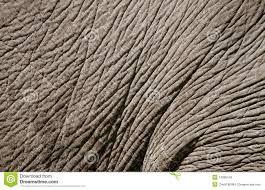 Afbeeldingsresultaat voor olifanten huid