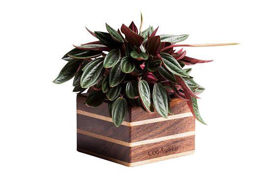 Walnut planter Wood paper clip holder for deskWood scotch