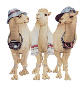 Camel Hump Day Photo:  This Photo was uploaded by luckypak. Find other Camel Hump Day pictures and photos or upload your own with Photobucket free image ...