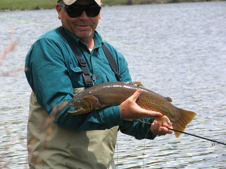20 best images about yellowstone cutthroat on pinterest for Best trout fishing near me