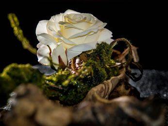 Sei wie eine Rose. Mit einem kleinen Leuchten, bestimmt sie den ganzen Raum.  #Rose #Wurzel #Gesteck #Raumschmuck #Floristik  EBK-Blumenmönche Blumenhaus – Google+
