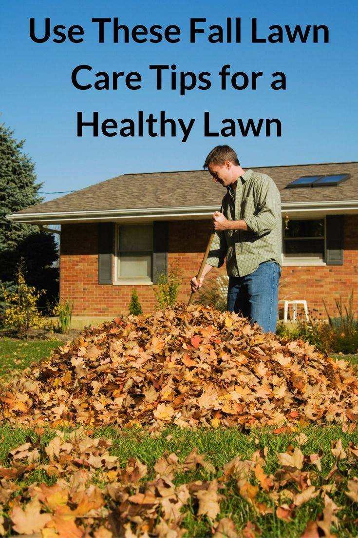 ... about Fall Lawn Care on Pinterest   Lawn Care, Lawn Care Tips and Lawn