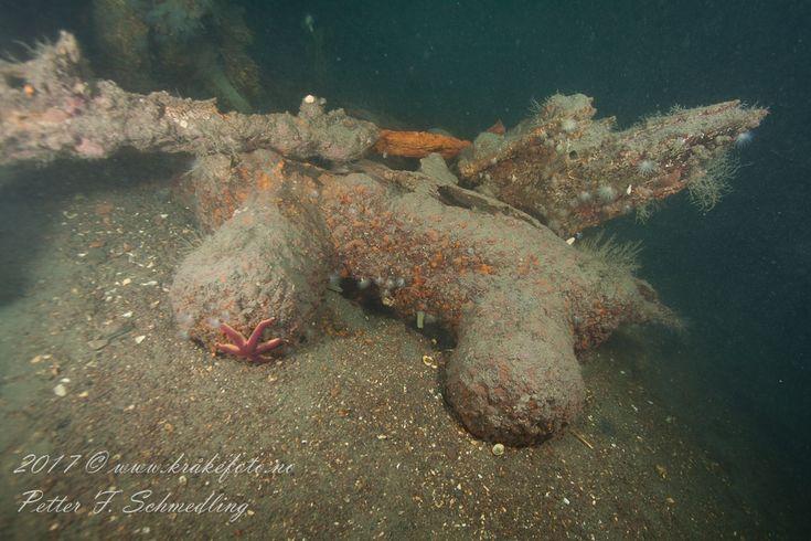 Part of a shipwreck off Jeløya, Moss, Norway © Petter F. Schmedling www.krakefoto.no