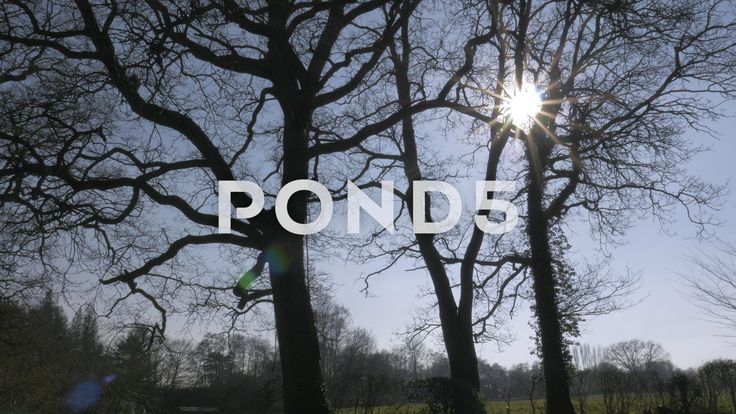 4k Pan Up Trees In Park To Sunlight Lens Flare Silhouette - Stock Footage | by RyanJonesFilms