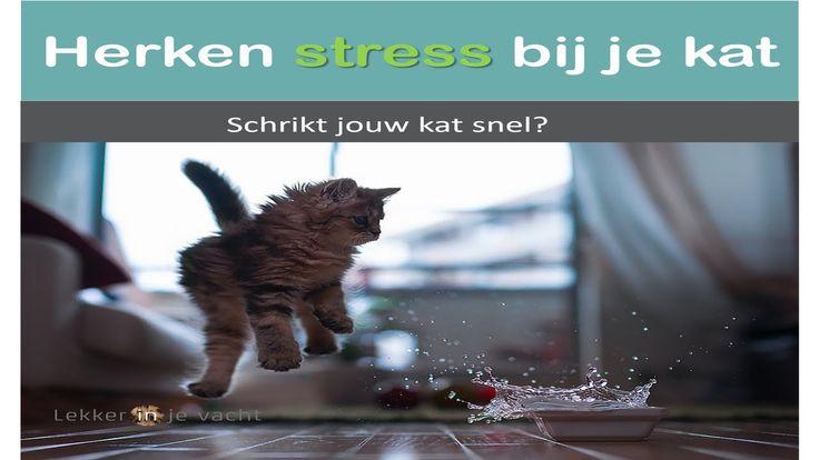 Stress bij katten herkennen   Kat schrikt van alles