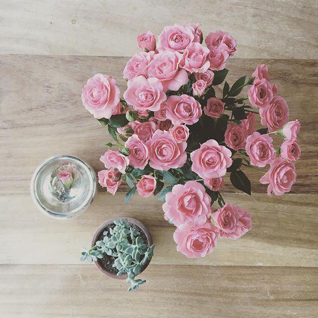 Entre rosas y suculentas :) me gusta