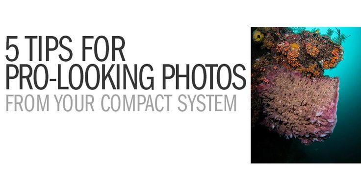 5 Tips For Pro-Looking Photos From Your Compact Camera System |