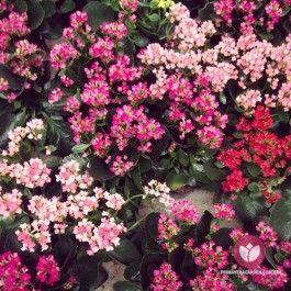 vistas pelos olhos dos nossos visitantes as flores do primavera garden parecem ainda mais lindas