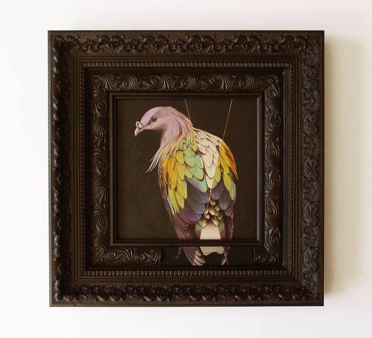 Nicobar Pigeon with Segmented Pigmentation, Drawing by Laura E Kennedy
