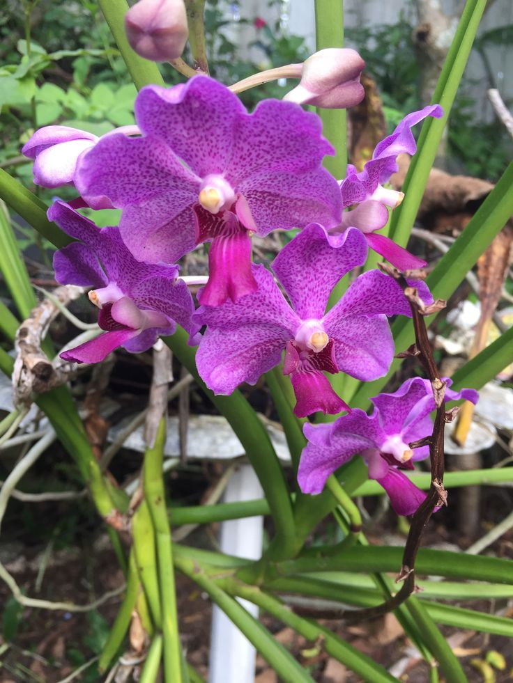 Love these wild orchids every time they bloom in my garden