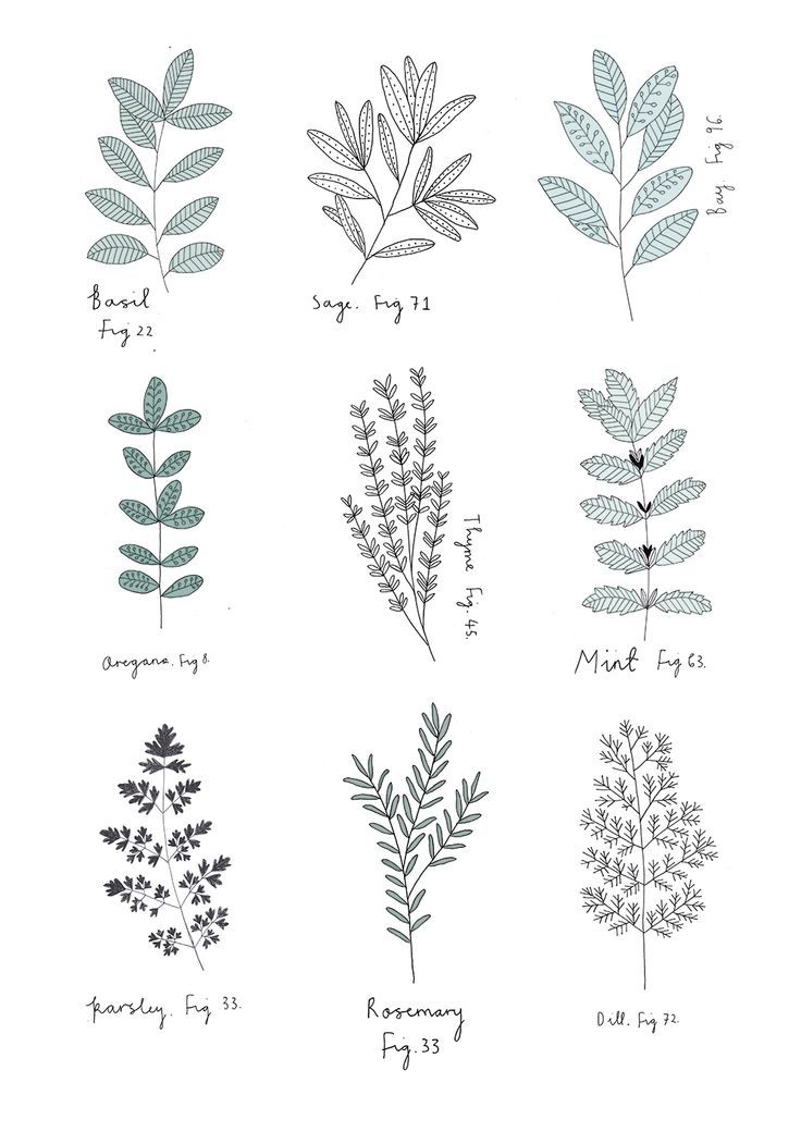 All kind of kitchen herbs, illustration, simplistic style.