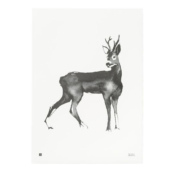 Kauris juliste, 50 x 70 cm