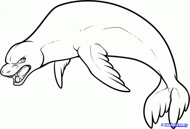 coloring book pages walrus - photo#10
