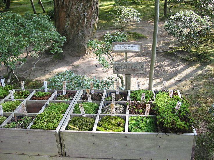 вырастить мох в саду: 10 тыс изображений найдено в Яндекс.Картинках