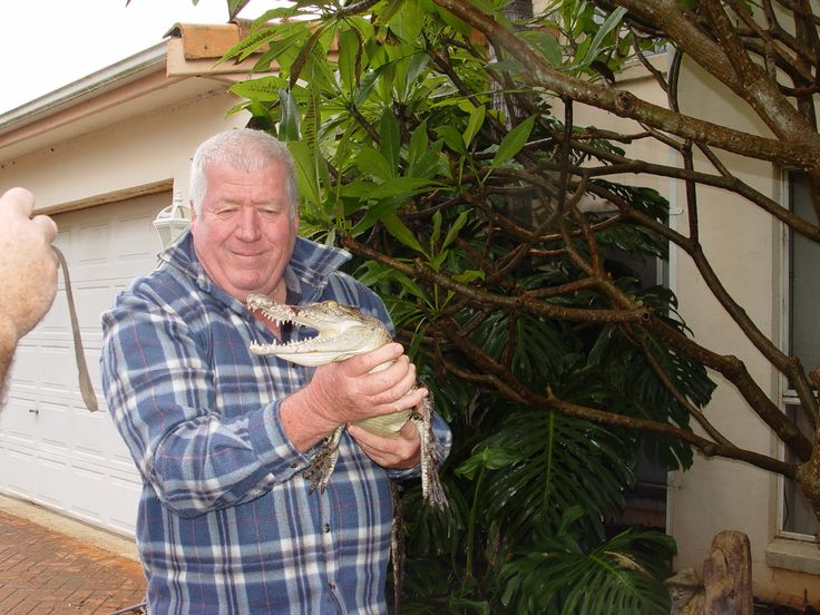 """Wally"" a juvenile Australian Salt Water Crocodile"
