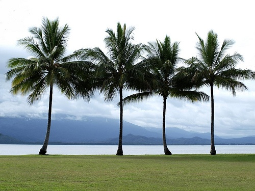 Port Douglas activities - things to see and do  Stunning photo, 10 out of 10 for composition! This is the tip of the peninsula, on Anzac Park.