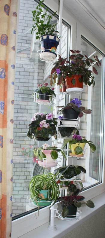 купить цветы на подоконник